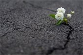 picture of flower growing out of crack in cement