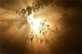 sun shining through smoke