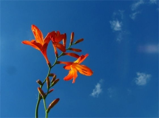 picture of flower with blue sky in the background