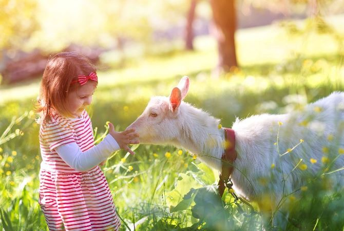 Girl petting goat